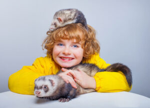 Ferrets as Pets for Kids
